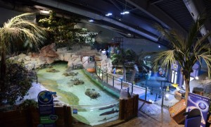 The National Sealife Centre